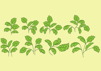 Cilantro Vector Icons - бесплатный vector #385801