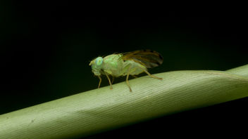 Unknown fly in green - image gratuit #386981