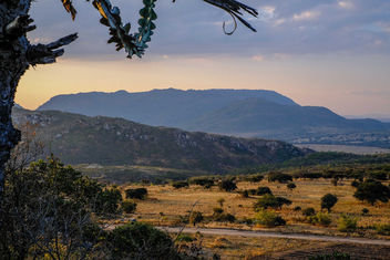 Wild Africa - image #389481 gratis
