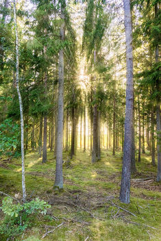 Sun in the forest - image gratuit #389811