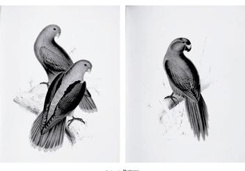 Vintage Parakeet Illustrations - Free vector #391101