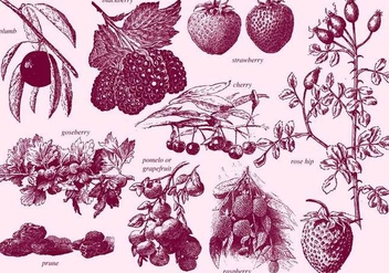 Vintage Berries - vector gratuit #391821