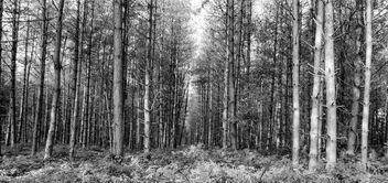 Trees, trees, trees - image gratuit #392741