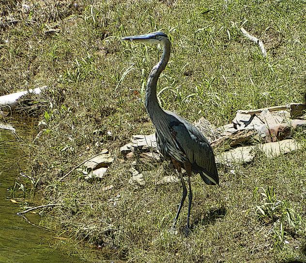 Heron at Gator Point (1) - Free image #392991
