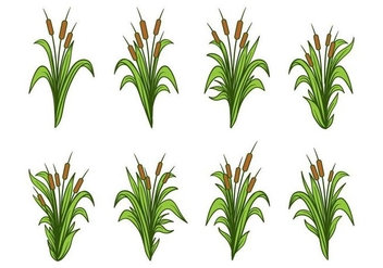 Free Hand Drawn Cattails Vector Set - Free vector #393131