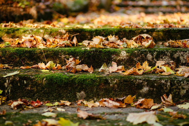 Park stairs in autumn - Free image #393521