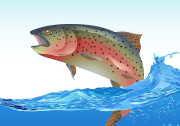 Rainbow Trout Jumping - Free vector #394931