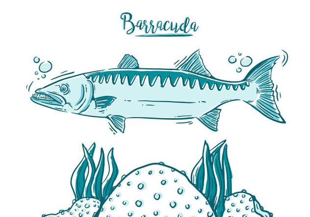 Free Barracuda Fish - Free vector #394981