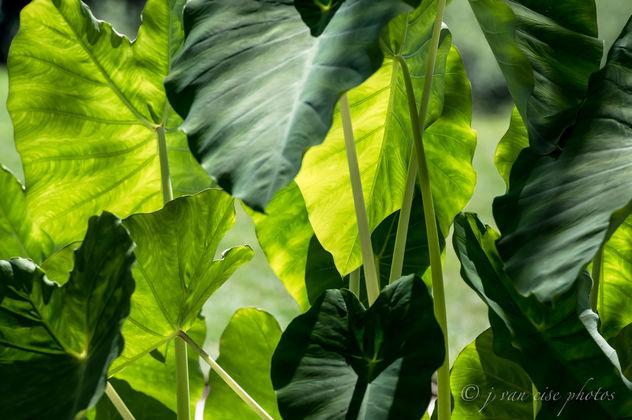 greenery - Free image #395091