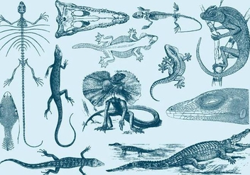 Vintage Lizard Illustrations - бесплатный vector #395341