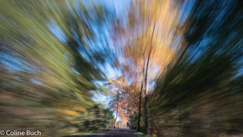 Fall colors at high speed! - бесплатный image #396521