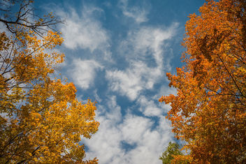 Autumn in Virginia - Free image #397601