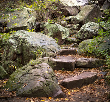 Nature's Stairs - Free image #397811