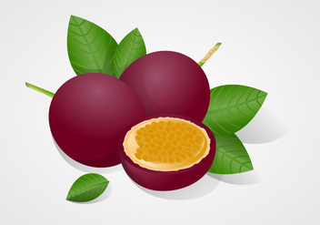 Free Passion Fruit Vector Illustration - Free vector #397871