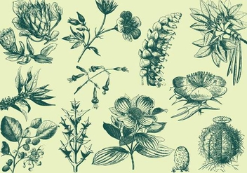 Green Exotic Flower Illustrations - Free vector #401451