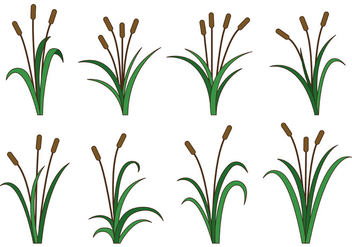 Set Of Cattails Vector - Free vector #403201