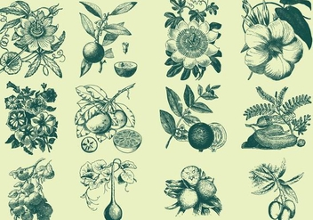 Green Fruit And Flower Illustration - vector #403221 gratis