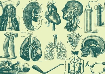 Green Anatomy And Health Care Illustrations - Free vector #405011