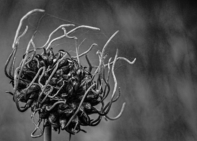 Alien Bud - image #405261 gratis