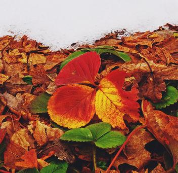 Couleurs d'automne. - Free image #405281