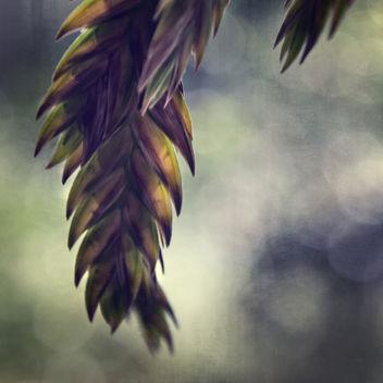 Chasmanthium latifolium - image gratuit #405341