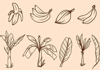 Free Hand Drawn Banana Tree Vector - vector gratuit #406051