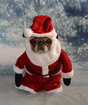 Old St. Nick Pug - Kostenloses image #406201