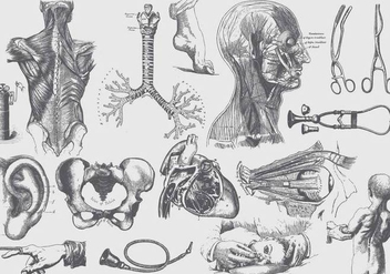 Gray Anatomy And Health Care Illustrations - vector gratuit #406751