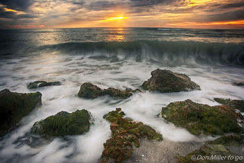 My Florida - Free image #407981