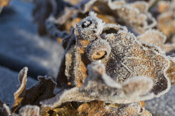 Frozen - Kostenloses image #408011