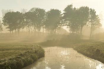 A touch of sunlight - Biesbosch, Dordrecht - Free image #410081