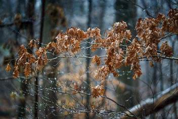 When leaves meet the ice! - Free image #410291