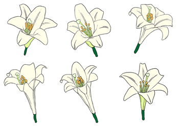 Easter Lily Free Vector - Kostenloses vector #410461