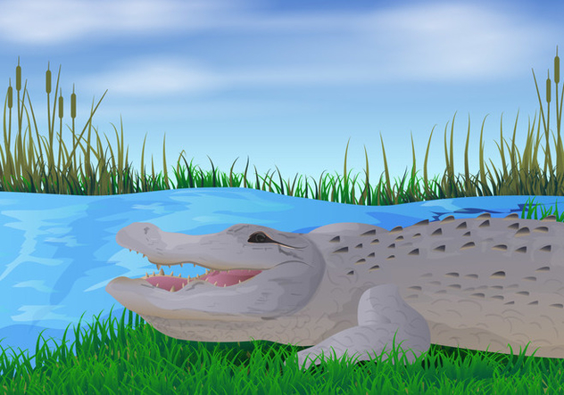 Gator In The River Illustration - Free vector #412351