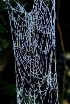 Frozen drops - image gratuit #413031