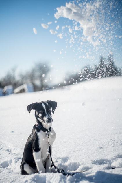 Oh no! Snow! - Free image #413091