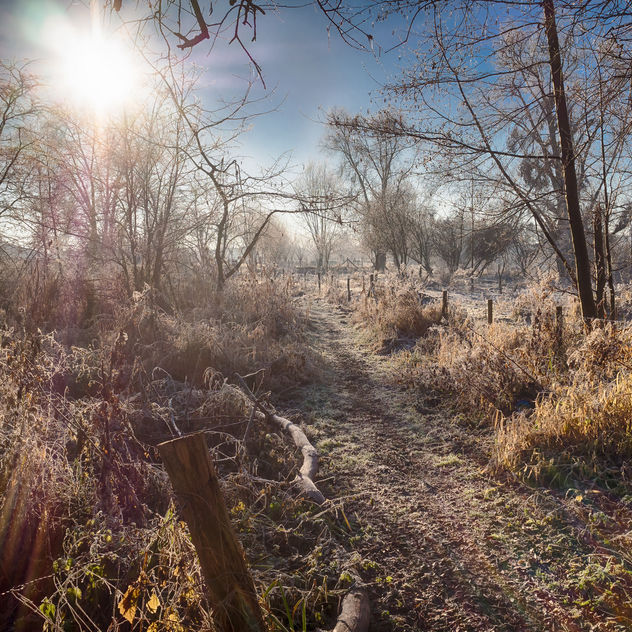 Wintermood - Free image #413391