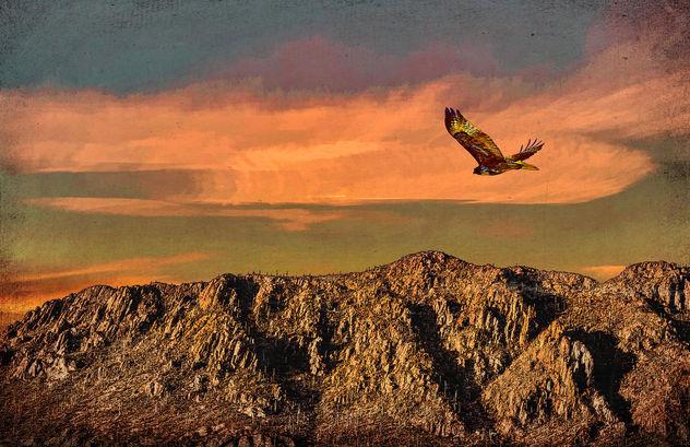 Flying Southwest - image gratuit #414171