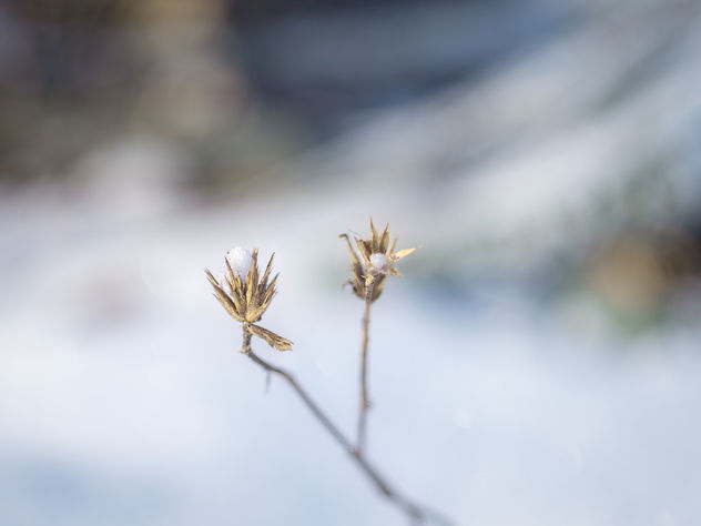 Icy wind blowing - Free image #415081
