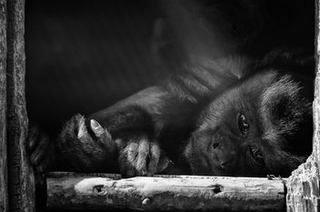 Monkey - Kostenloses image #415981