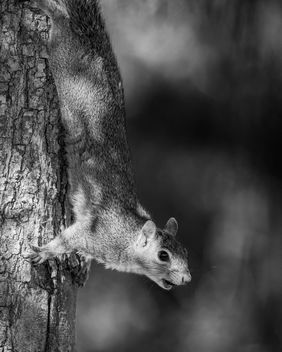Squirrel - Free image #419621