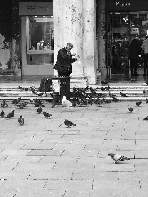 Pigeon Man - image gratuit #421241