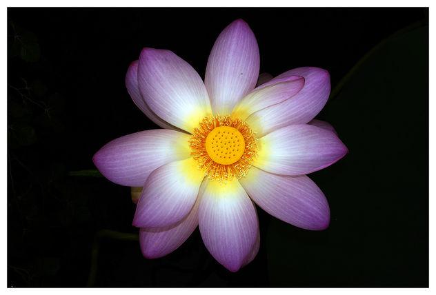 bloom - image #423081 gratis