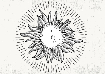 Free Hand Drawn Sunflower Background - Kostenloses vector #423771