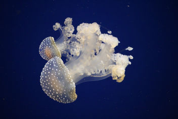 Jelly-Fish glowing - Kostenloses image #424061