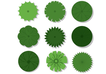 Plant Top View Vectors - vector gratuit #424841
