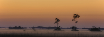 Everglades Sunrise - Free image #427181