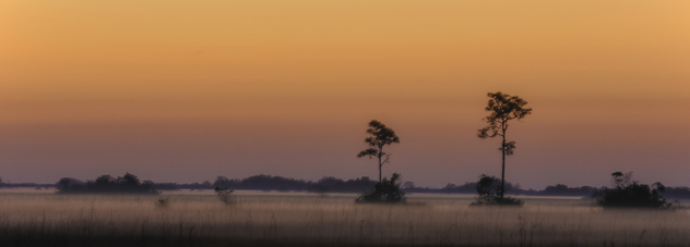 Everglades Sunrise - Kostenloses image #427181
