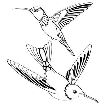 Vector illustration of black birds on white background - vector gratuit #127241