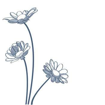 Vector illustration of blue camomiles on white background - vector #127271 gratis